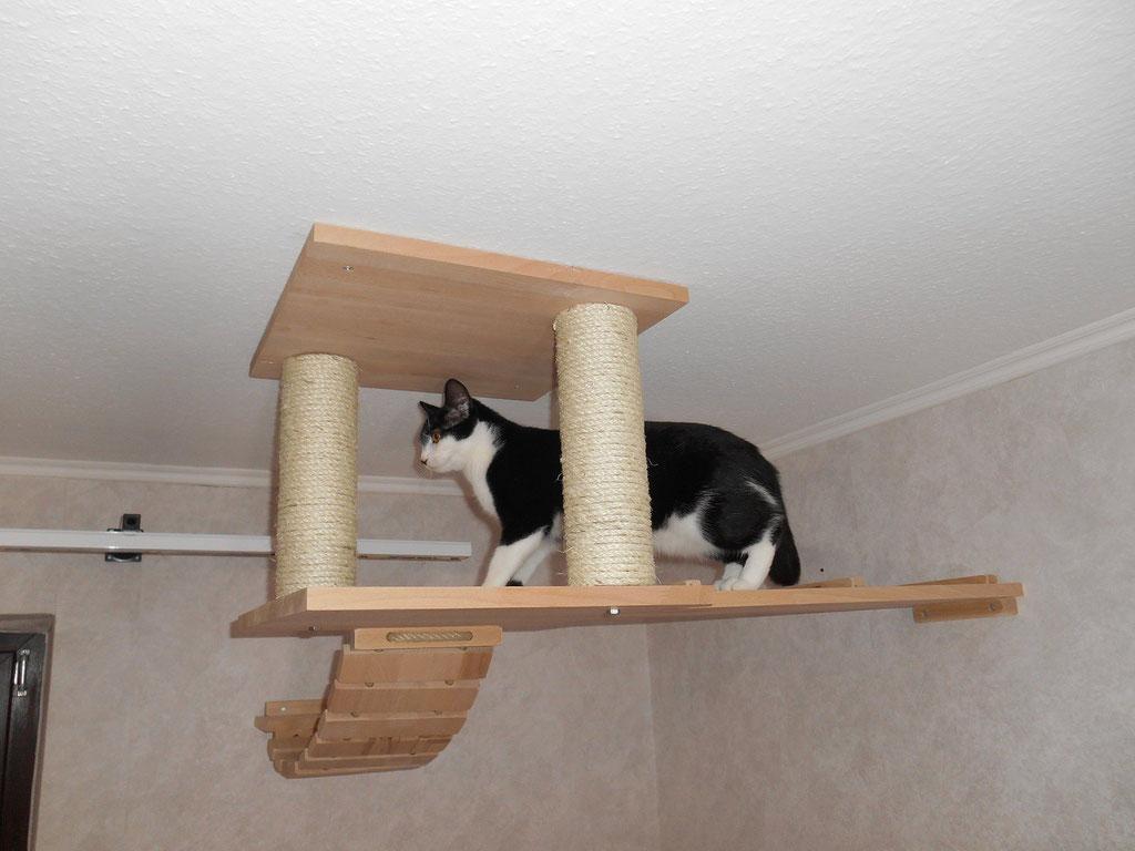 katzenbaum für große katzen / kratzbaum für die wand - tolle katzen
