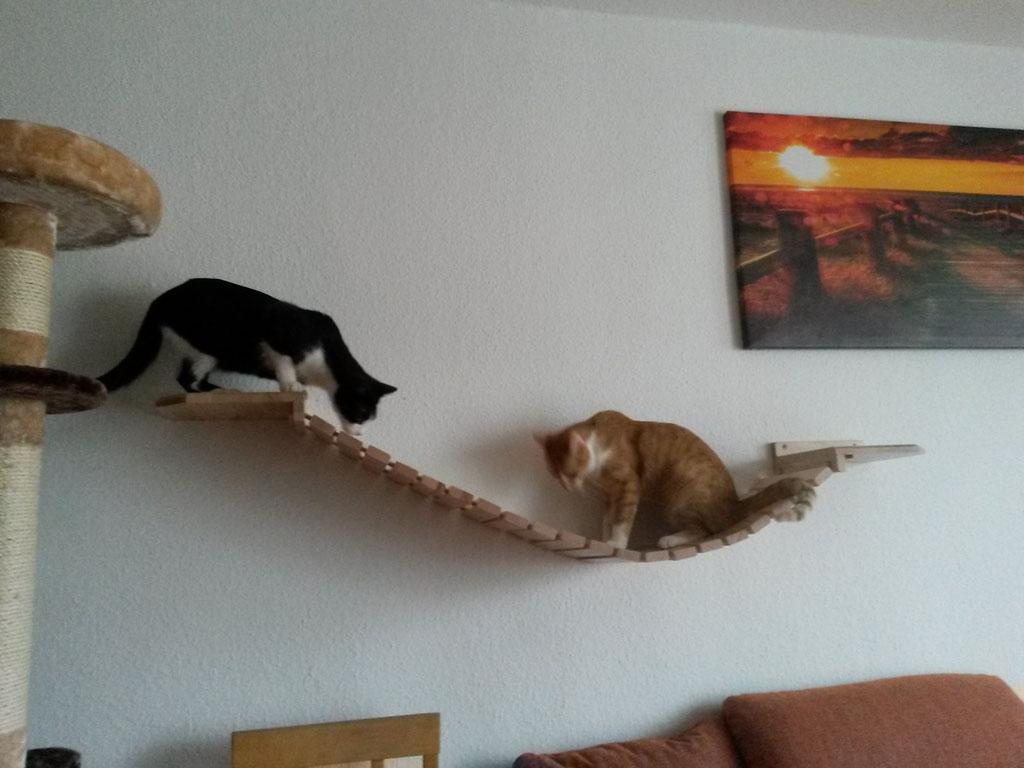 Katzenspielzeug Wand