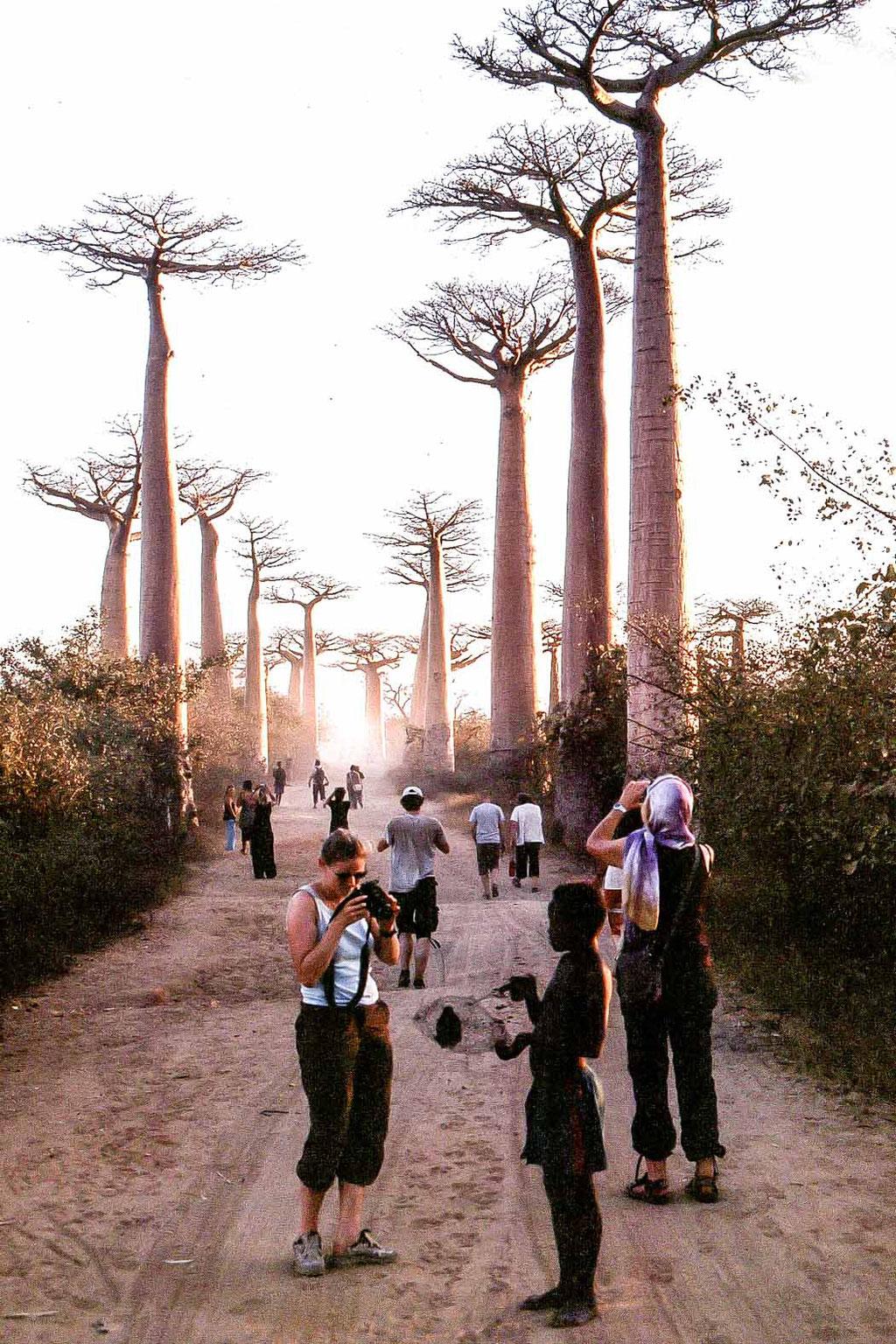 Baobap Allee/alley, bei/near Morondova, Madagaskar