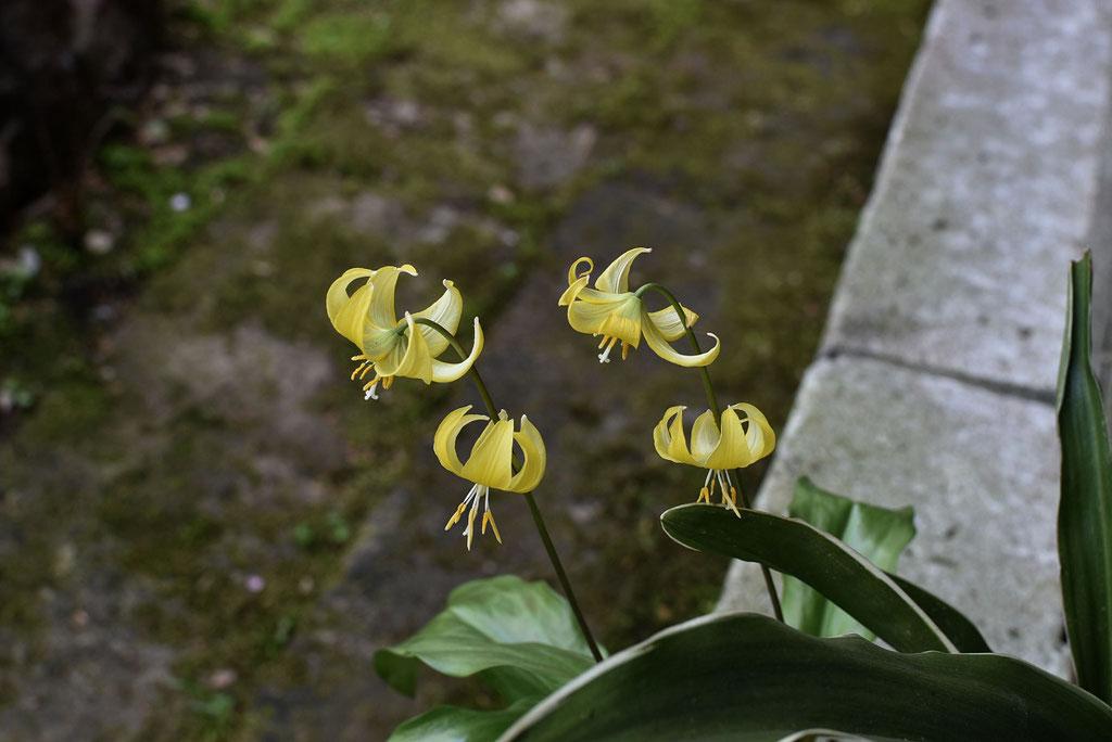 ひっそりと咲く黄色い花