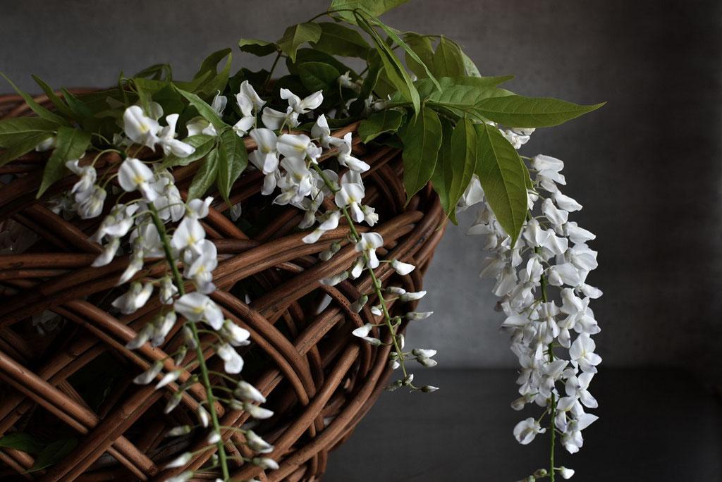藤の花の甘い香りに癒される