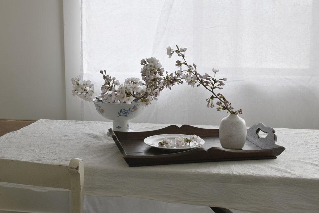 おうちの中で静かにお花見