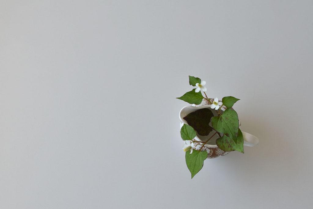 どくだみの可憐な花