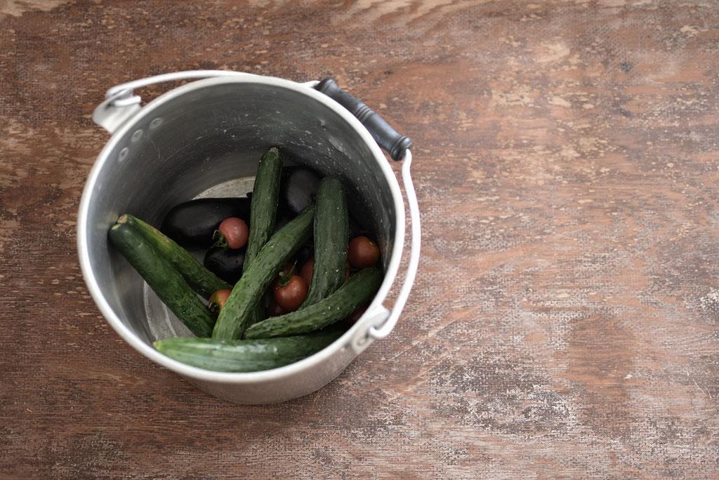 自家菜園の新鮮野菜が採れたて