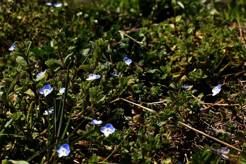 春だー!!小花も嬉しそう