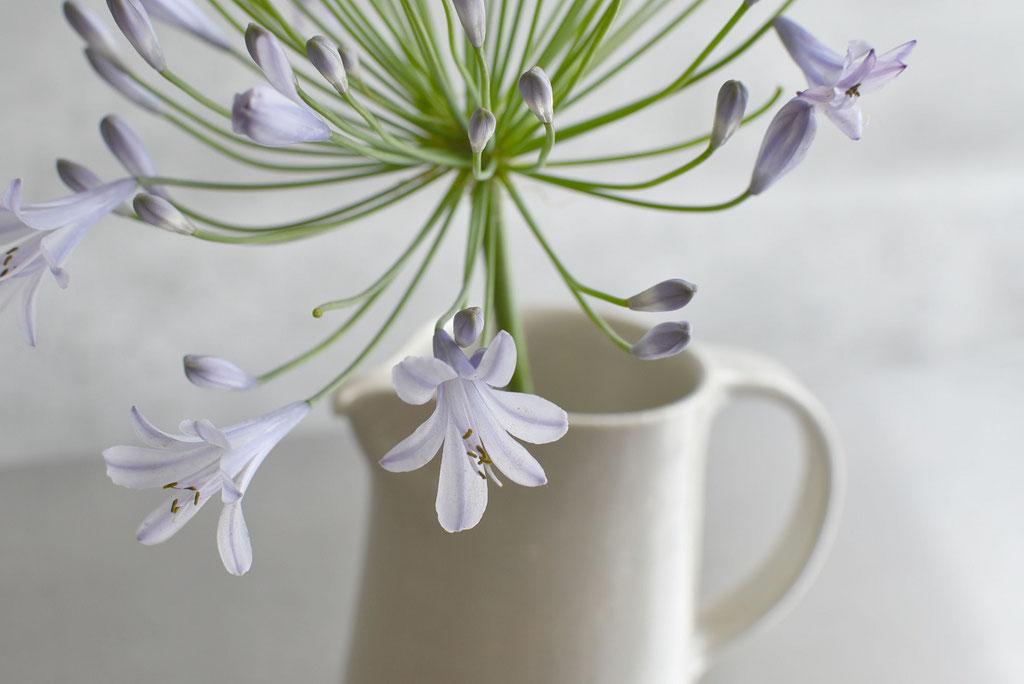 たくまポタリーのピッチャーに涼しげで大胆な花