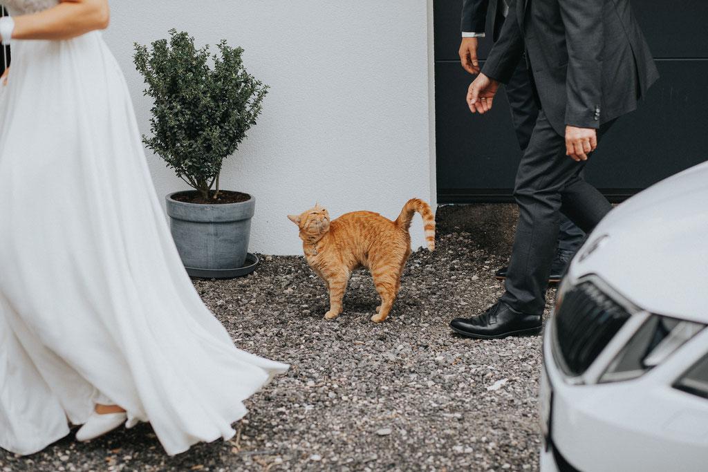 Katzen auf Hochzeiten (c) Mara Pilz Fotografie