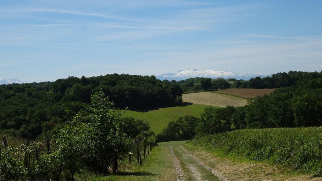 Le chemin est bordé d'arbres fruitiers plantés pour les pélerins