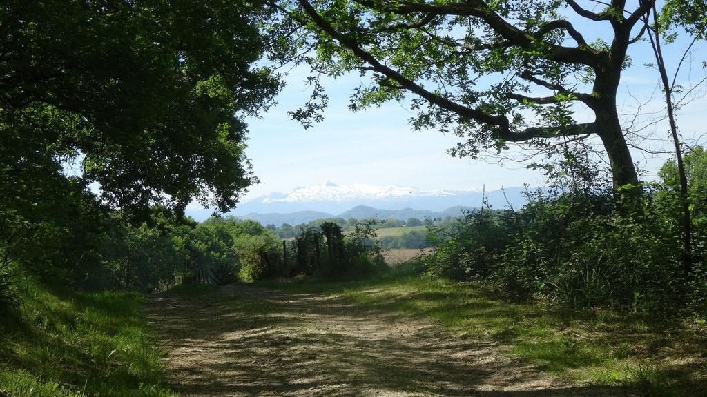 Le chemin est vraiment beau aujourd'hui