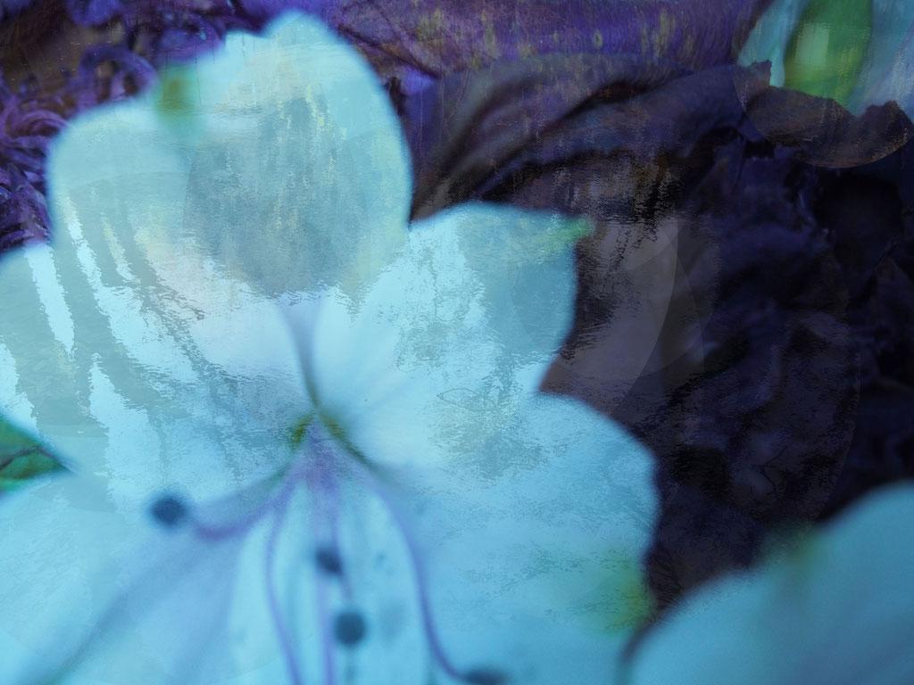 Florescence                                   ©asanuma.brice.cecile