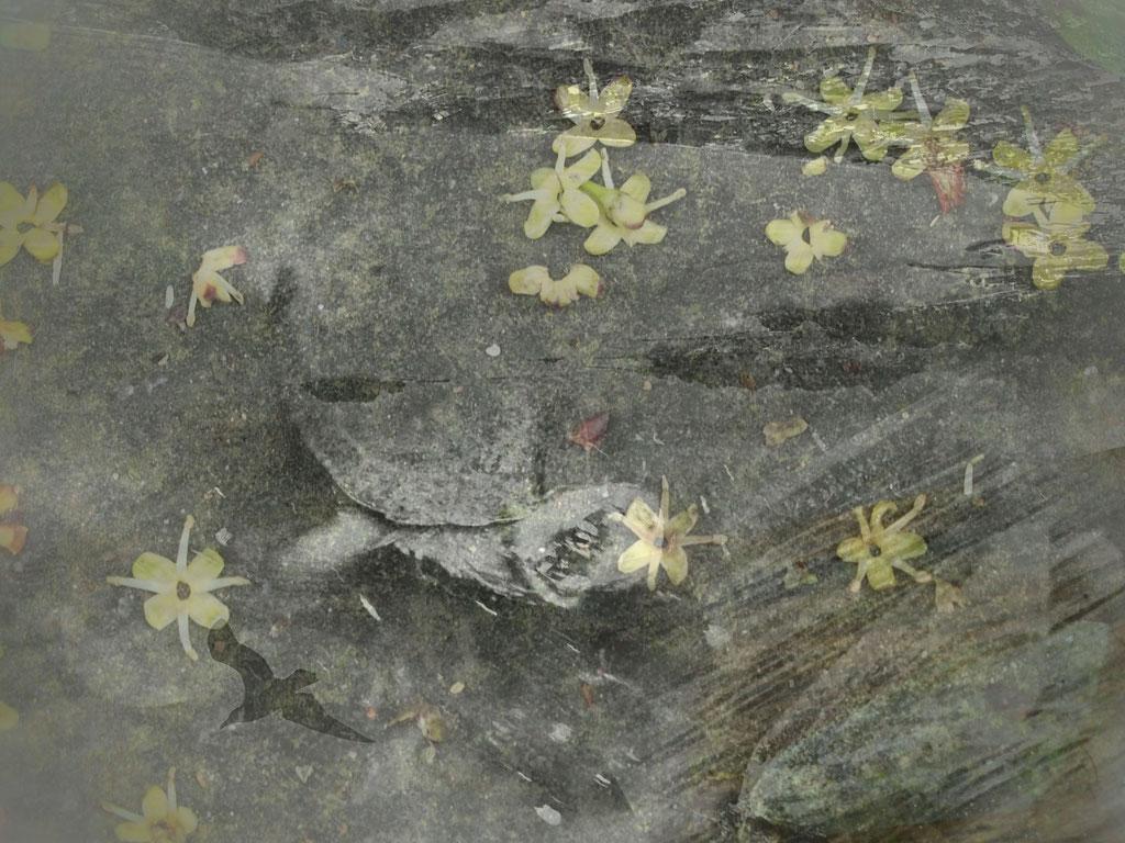 La tortue de Zénon ©asanuma.brice.cecile