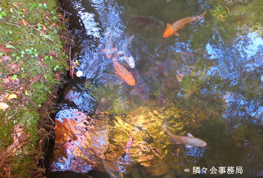 ∞ 鯉 於: 金屋子神社