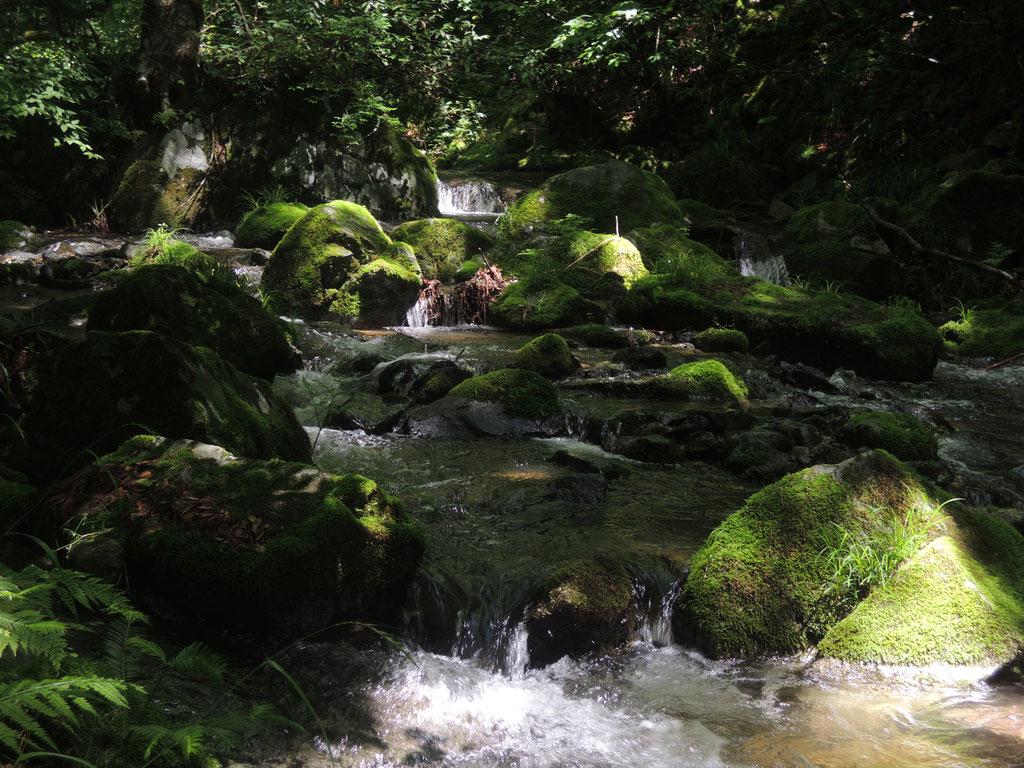 光と陰が水面と緑に映えて。。。幻想的な景色。