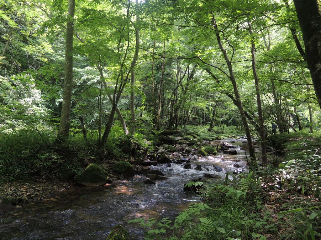 新見市大井野、御洞渓谷の下流にある遊歩道。