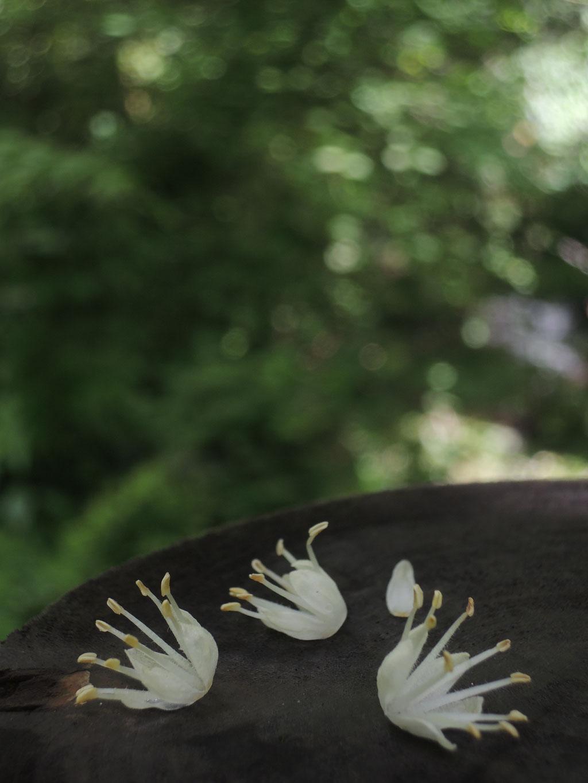 卯木の花が王冠のよう!