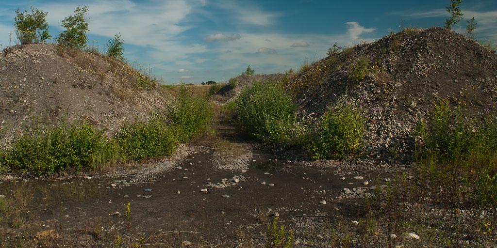 Im Schutz der vielen Hügel entwickelt sich höher wachsende Vegetation.