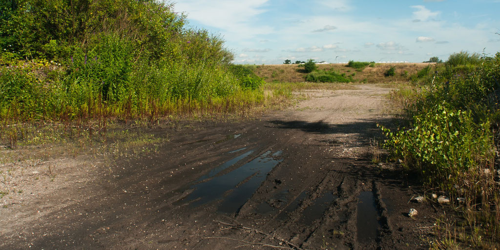 Selbst in solchen wassergefüllten Fahrrinnen laichen Kreuzkröten. Oft findet man dort Hunderte Kaulquappen.