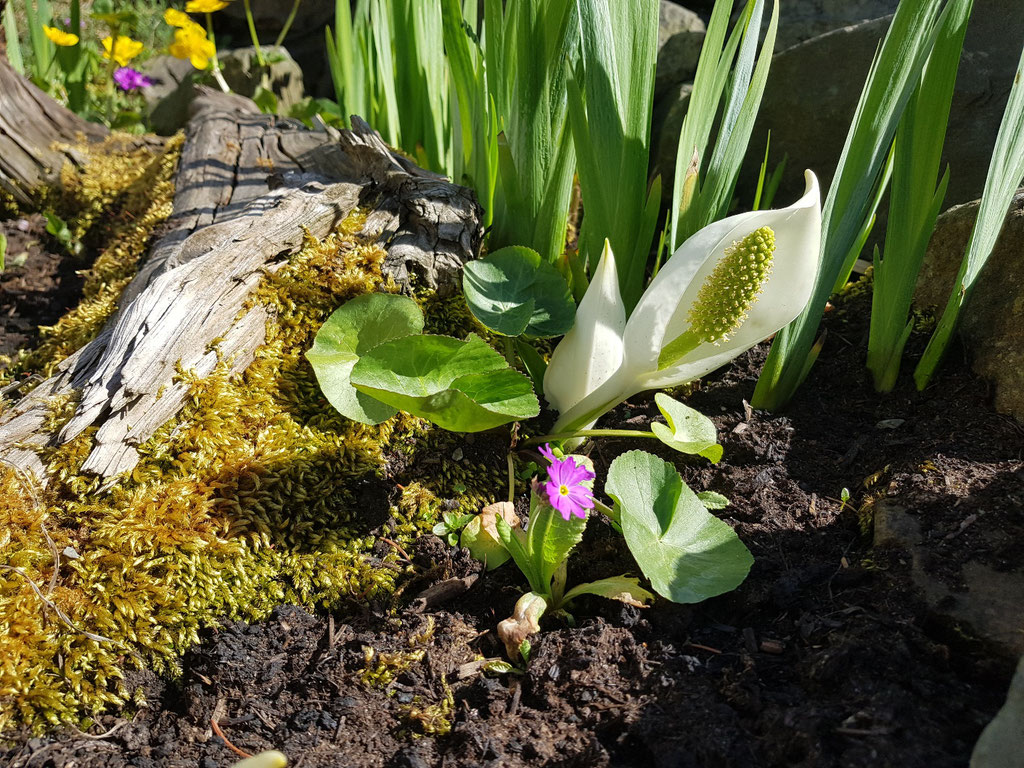 Bunter Frühling