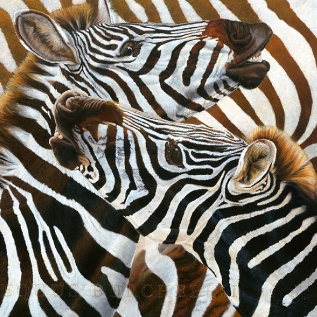 Beck, les zebres