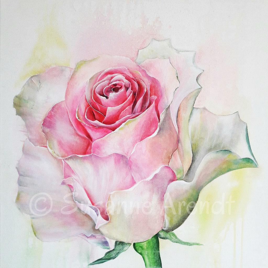 Wie die Rose eine Königin