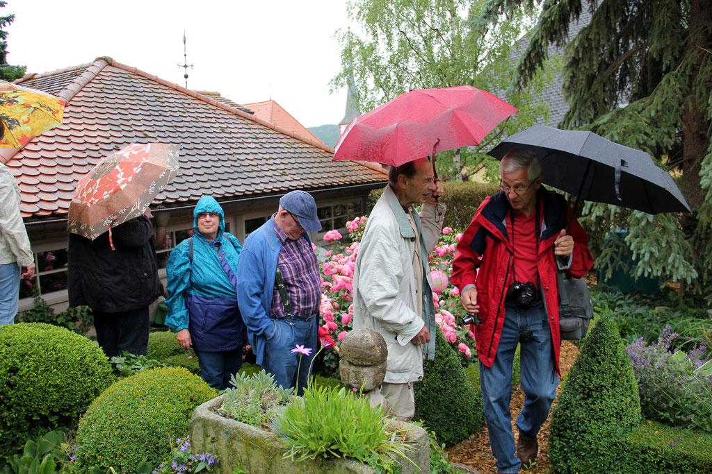 Führung von Herrn und Frau Wüst durch den Garten.  Echte Garten- und Rosenfreunde lassen sich durch nichts erschüttern.