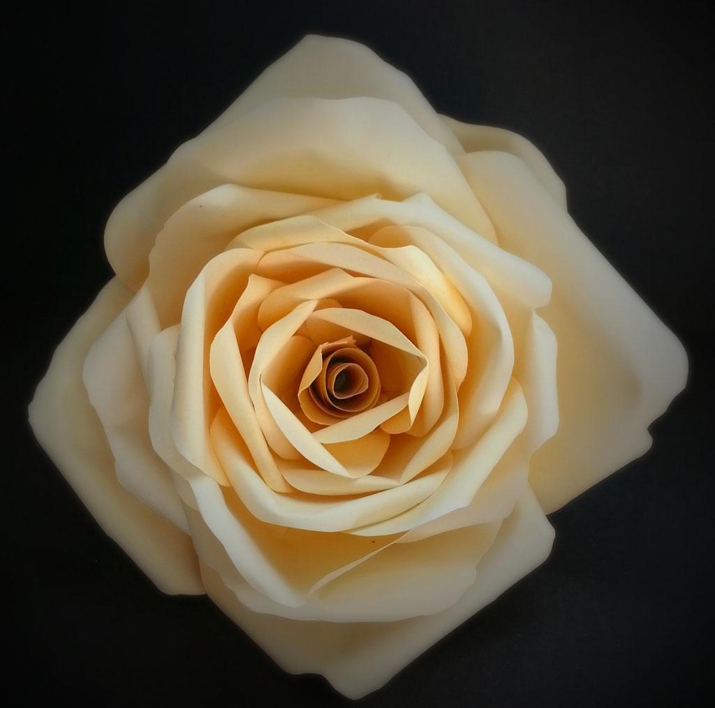 rosa beige di carta