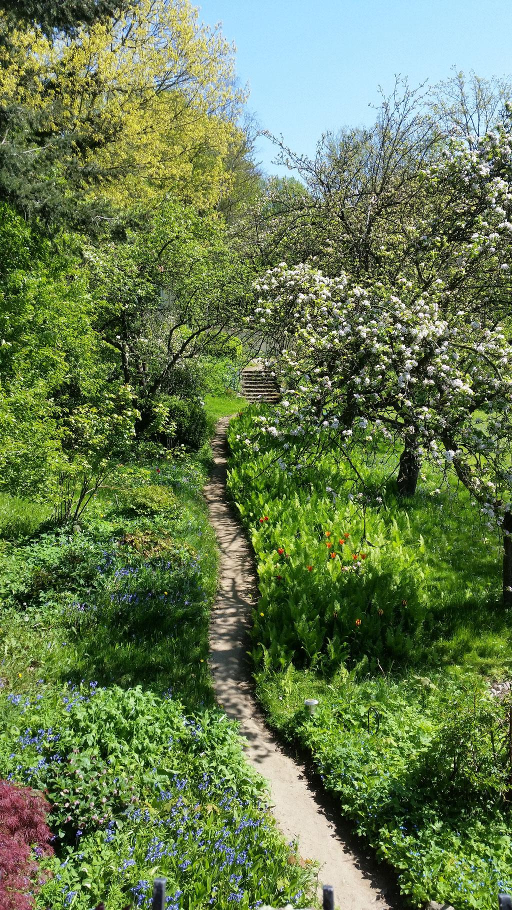 Der Garten vom Küchenfenster aus gesehen.