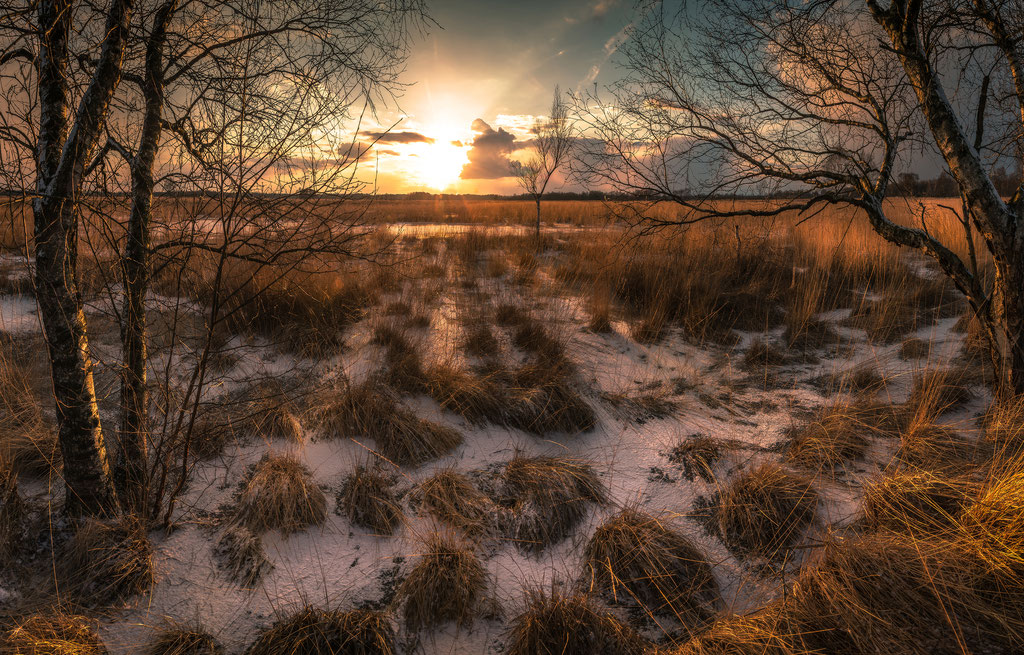Wierdense veld, Martijn van Steenbergen, © 2018