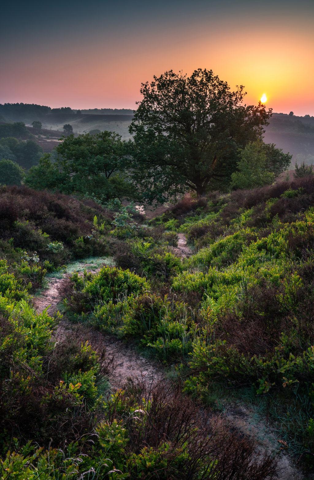 Dutch national park Veluwezoom, Martijn van Steenbergen, © 2018