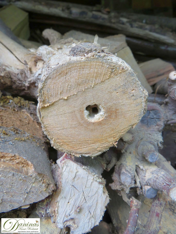 Hummelköniginnen verbringen die kalte Jahreszeit oftmals in hohlen Holzstämmen.