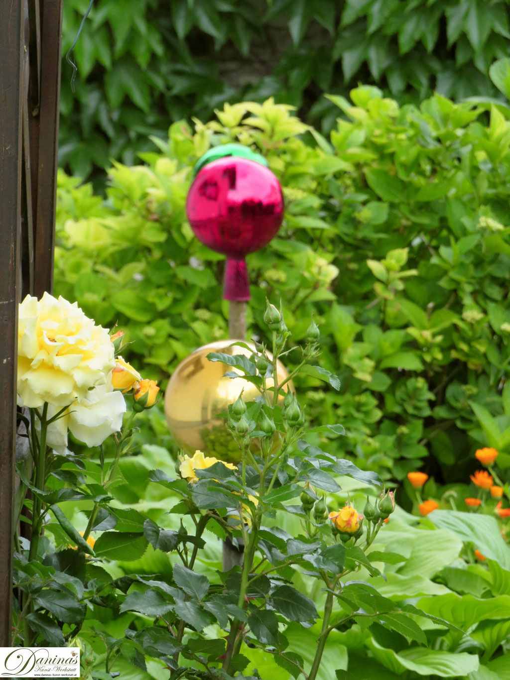 Im Rosengarten - gelbe Kletterrose