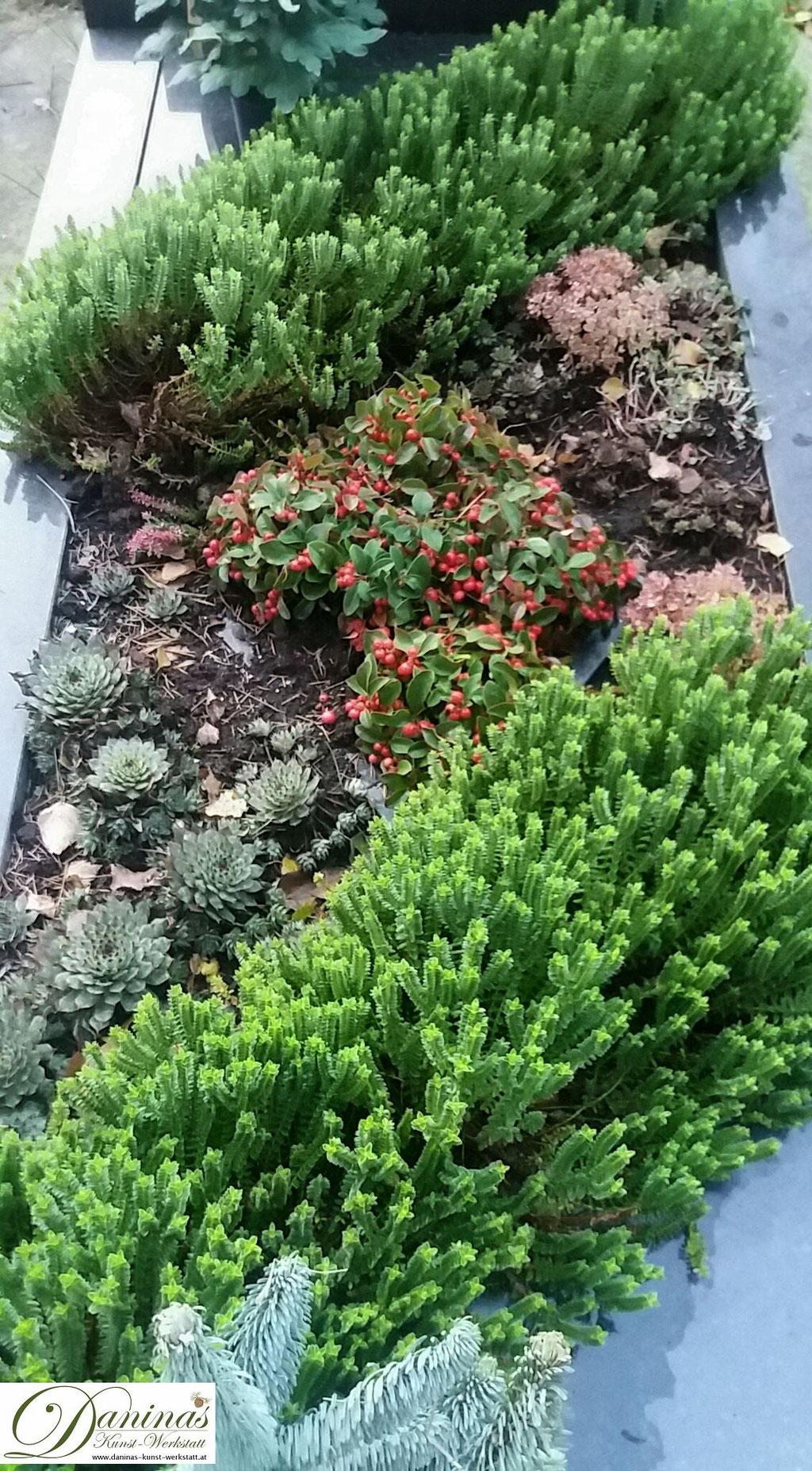 Grabgestaltung und Grabbepflanzung im Herbst mit Hauswurz. Beispiele und Ideen zum Selbermachen.