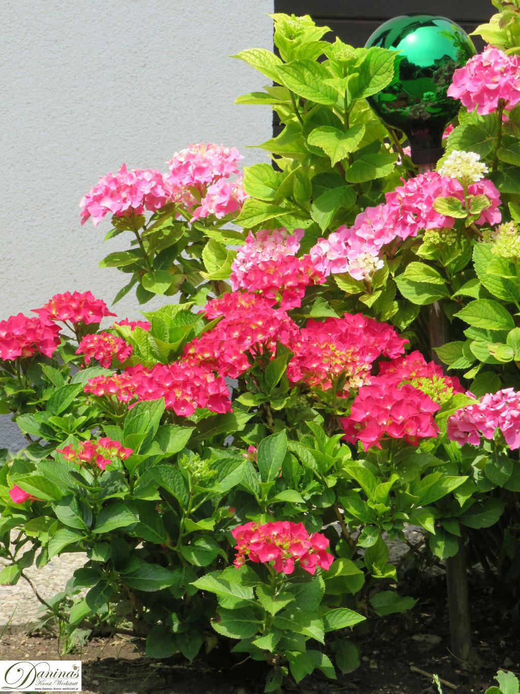 Romantischer Hortensien Gartenbeet