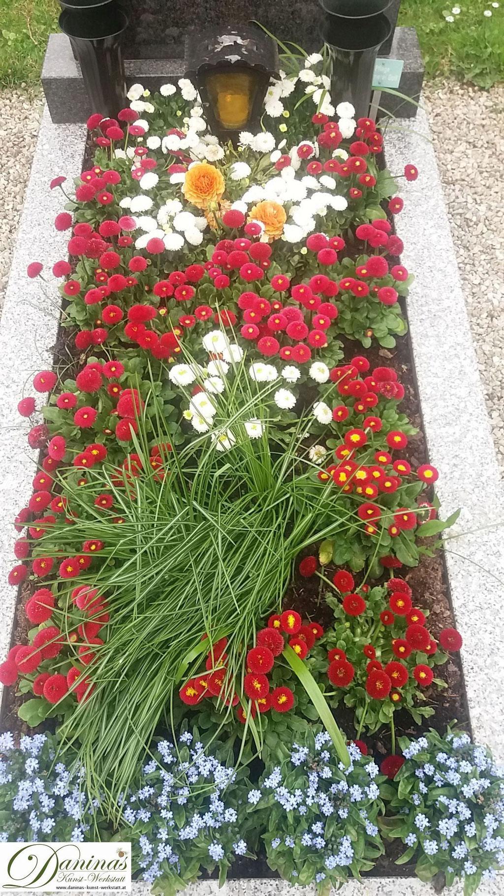 Grabbepflanzung Frühjahr mit roten und weißen Bellis, Vergissmeinnicht und Segge