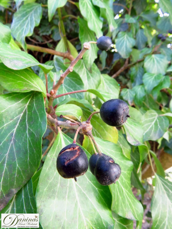 Efeu gehört in den naturnahen Garten, es bietet Vögeln Unterschlupf und Nahrung