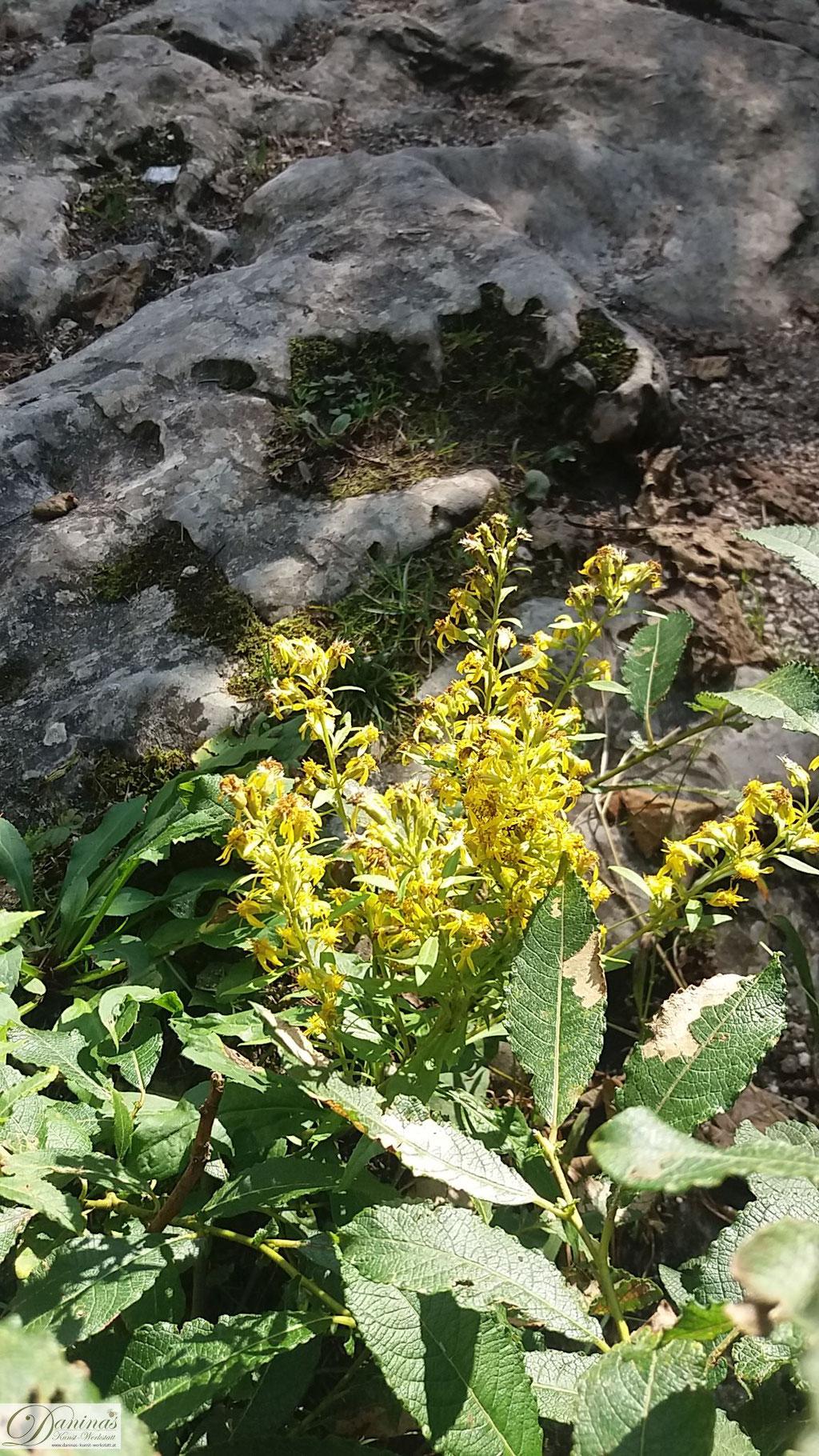 Pflanze auf Felsen