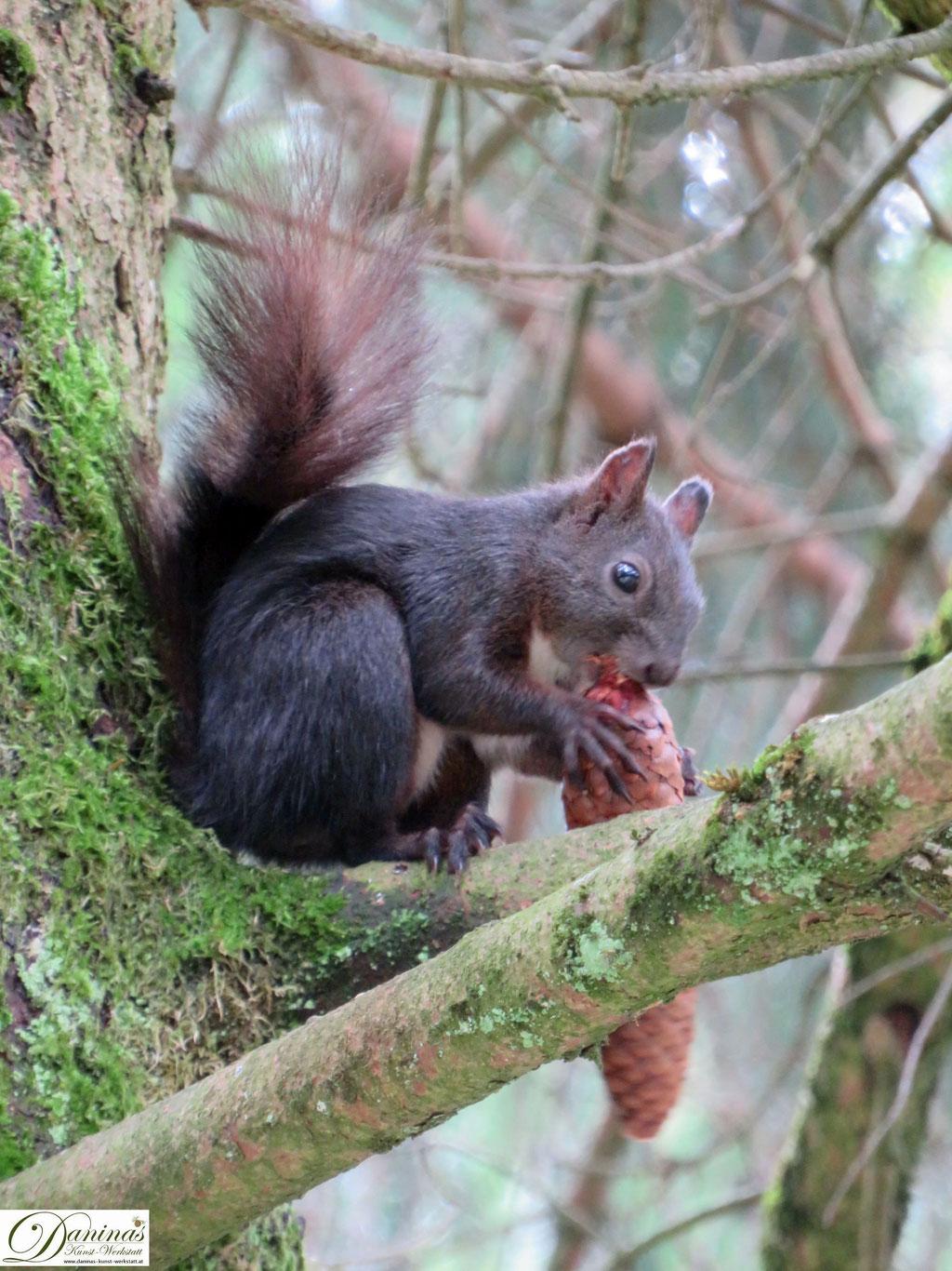 Im naturnahen Garten finden sich Nadelbäume, Eichen und Nussbäume, die Eichhörnchen anlocken.