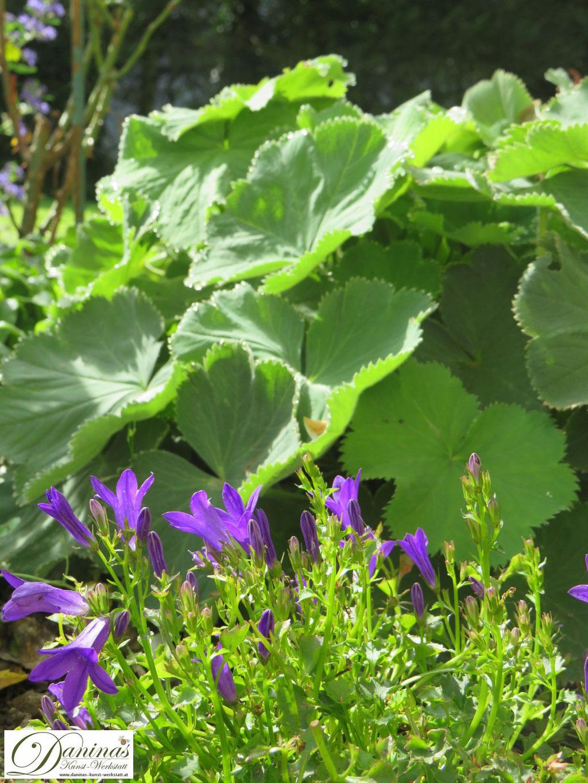 Winterharte Pflanzen für Gräber: Frauenmantel