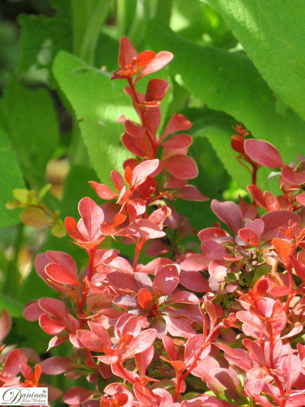 Schmuckblattpflanzen im Cottage Garten