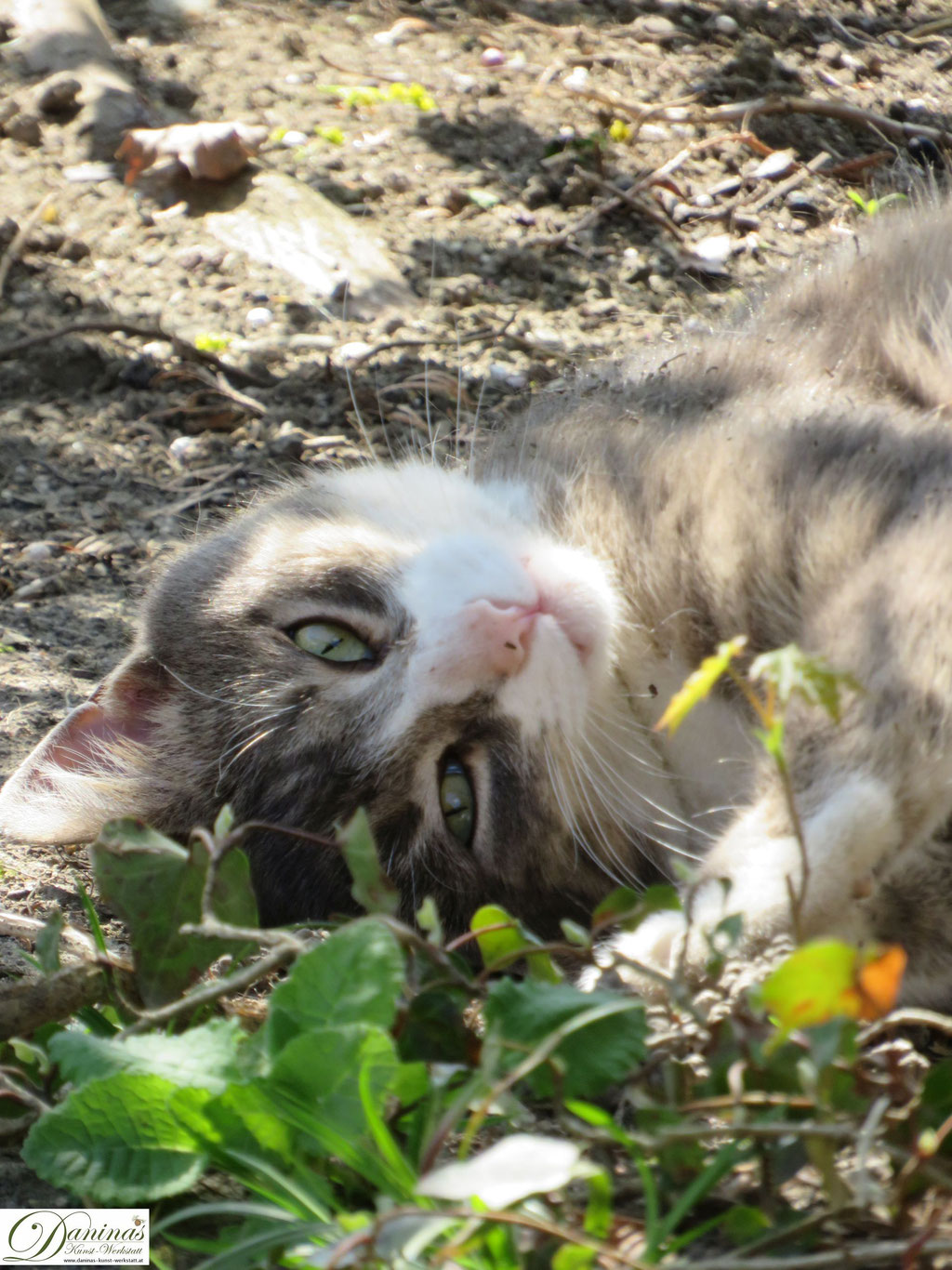 Katze Pauli genießt den Frühling im Garten