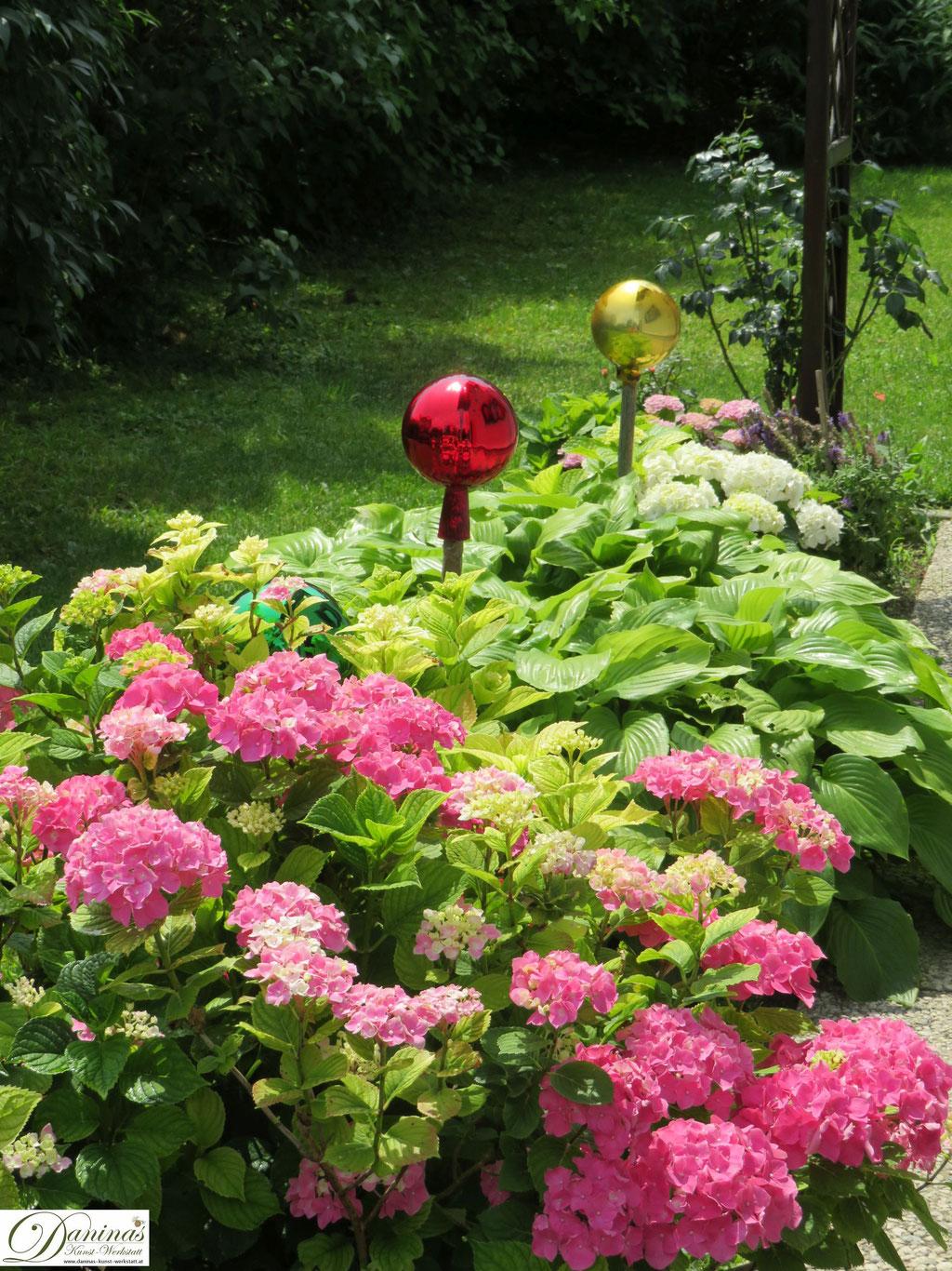Romantischer Hortensien Garten kombiniert mit Funkie und Rosen