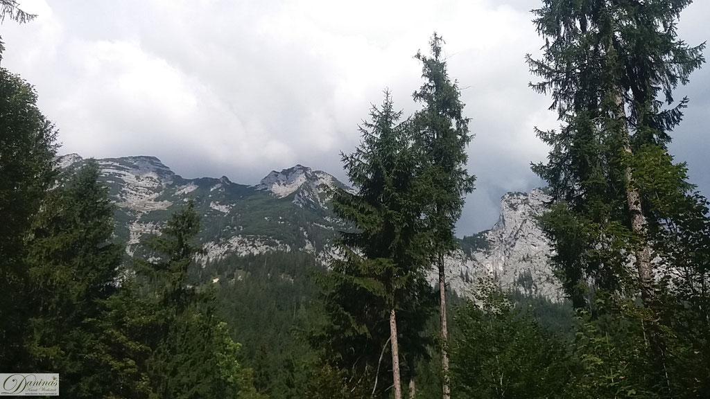 Wald mit Bergblick