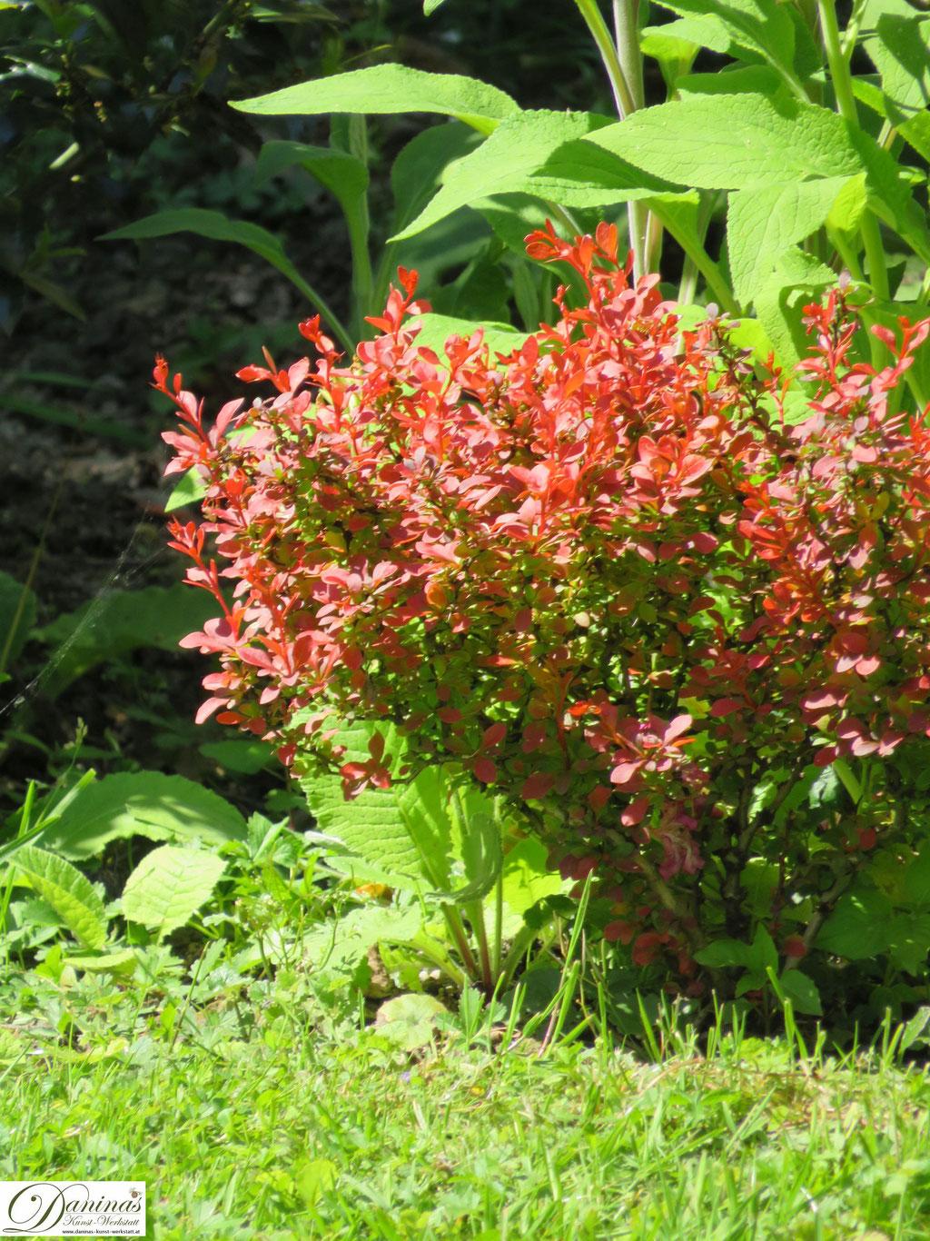 Schmuckblattpflanzen im Strauchbeet