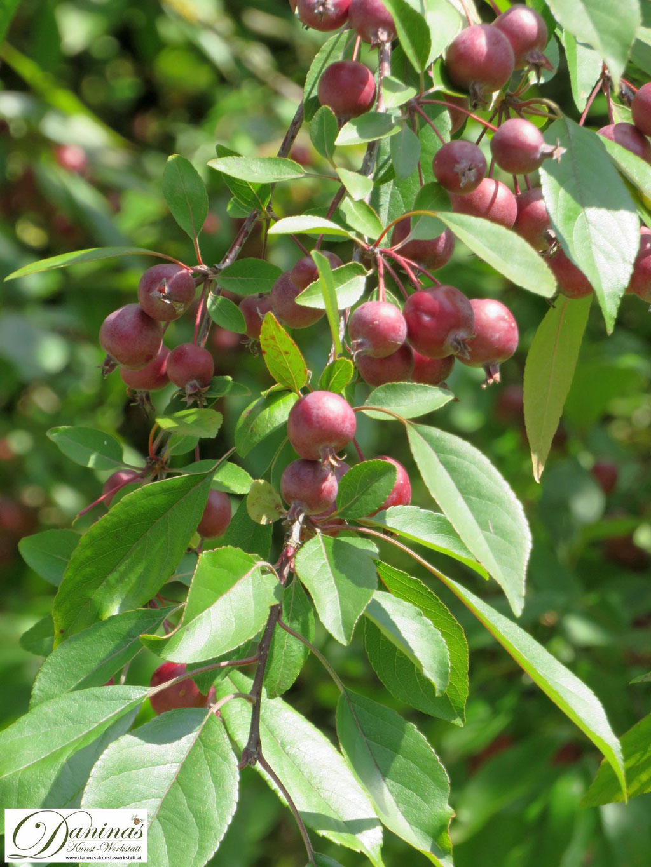 Fruchtbildende Bäume wie der Zierapfel ziehen Vögel magisch an und gehören in jeden naturnahen Garten