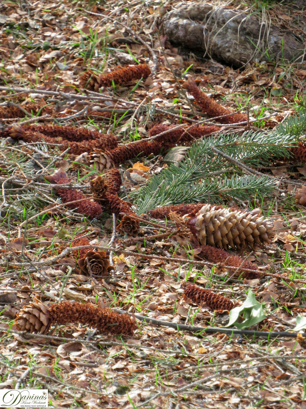 """Fichtenzapfen - von Eichhörnchen """"zerlegt"""" um an die Samen zu kommen."""