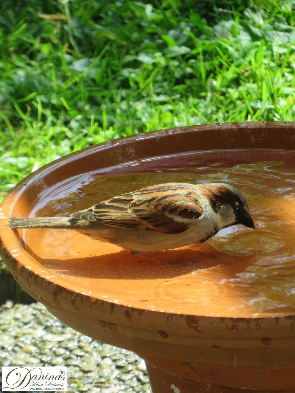 Im Naturgarten stehen im Sommer Vogeltränken mit sauberen Wasser gegen den Durst und zum Baden bereit