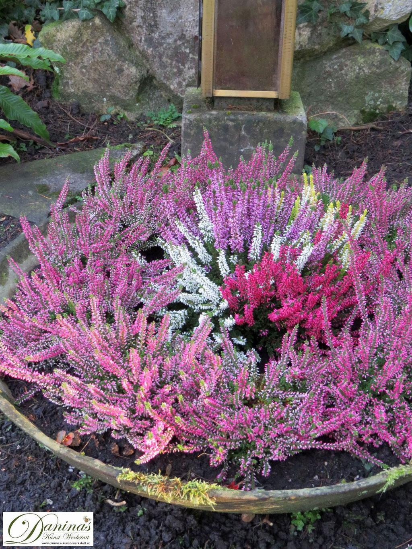 Grabgestaltung Mustergräber - Schale mit bunten Erika Pflanzen