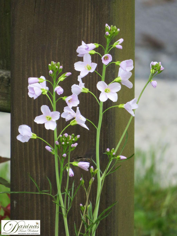 Im naturnahen Garten dürfen Wildkräuter wie das Wiesenschaumkraut wachsen