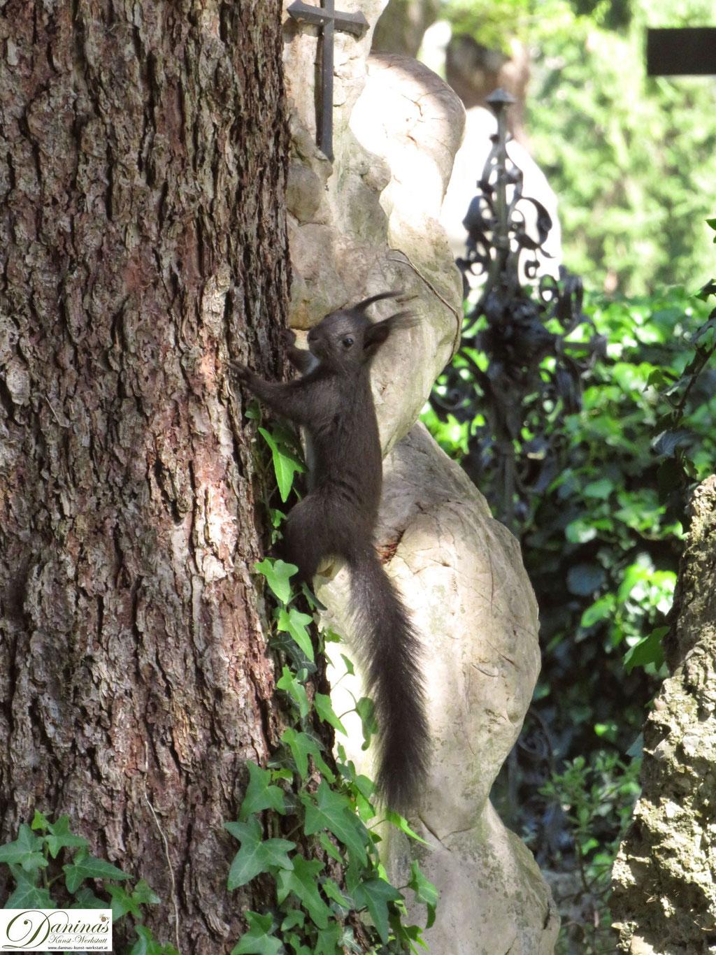 Tröstende Tiergesellschaft im Garten der Toten: Entzückende Eichhörnchen auf Nahrungssuche. Der Salzburger Kommunalfriedhof ist einzigartig und einen Besuch wert!