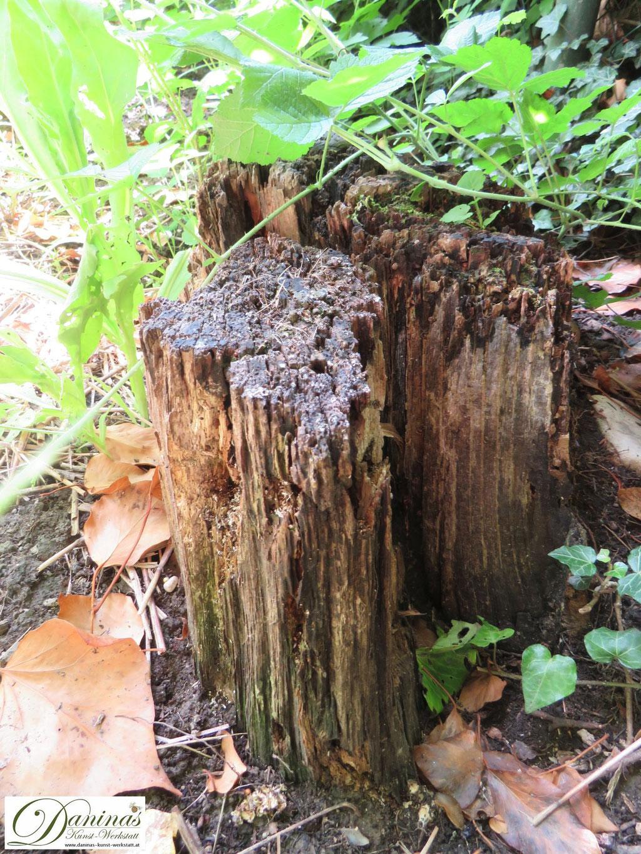 Totholz bietet im naturnahen Garten Lebensraum und Winterquartier für Insekten